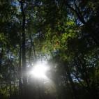 nur schwer kommt die Sonne durch den dichten Wald im Nationalpark