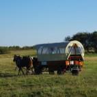 mit dem Pferdewagen durch den Nationalpark