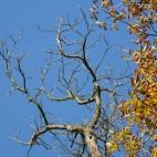 Der Herbst hinterläßt seine Spuren