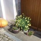 Herbststillleben