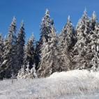 Winterwunderwald am Rennsteig