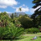 Eine der grünen Oasen in Kapstadt - The Company's Garden