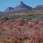 Einiges erinnert noch an die Blütenpracht im Namaqualand