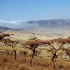 Und plötzlich gibt der Nebel den Blick auf den Ngorogoro-Krater frei.