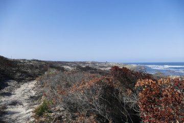 van Stadens Wildflower Reserve