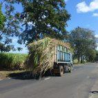 Achtung! Zucker! Die schönste Art, Mauritius kennen zu lernen, ist eine Radtour.