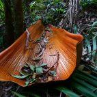 Riesige abgestorbene Palmenblätter verzieren dekorativ den Regenwald.