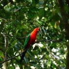 Bunte Papageien…