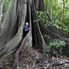 … und alte Bäume konnten wir im Manning River Valley bestaunen.