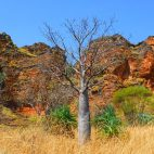 … und leuchtende Felsen in der Abendsonne. So macht die Fahrt durch die Kimberleys Spaß.