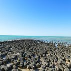 Stromboliten gehören zu den ältesten Lebensformen auf der Erde und sorgen seit Millionen von Jahren für Sauerstoff in unserer Atmosphäre.