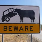 Hier wird recht deutlich veranschaulicht, was passieren kann. Das Rindvieh kommt dabei vergleichsweise gut weg.