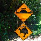 Helmkasuare sind seltene Tiere und der drastische Hinweis hat durchaus seine Berechtigung.