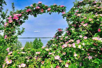 Blick auf den Zwenkauer See