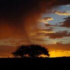 Januar in Namibia – es ist Regenzeit.