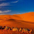 Sonnenuntergang in der Sahara (Marokko)