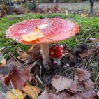 Mitten im Herbstwald